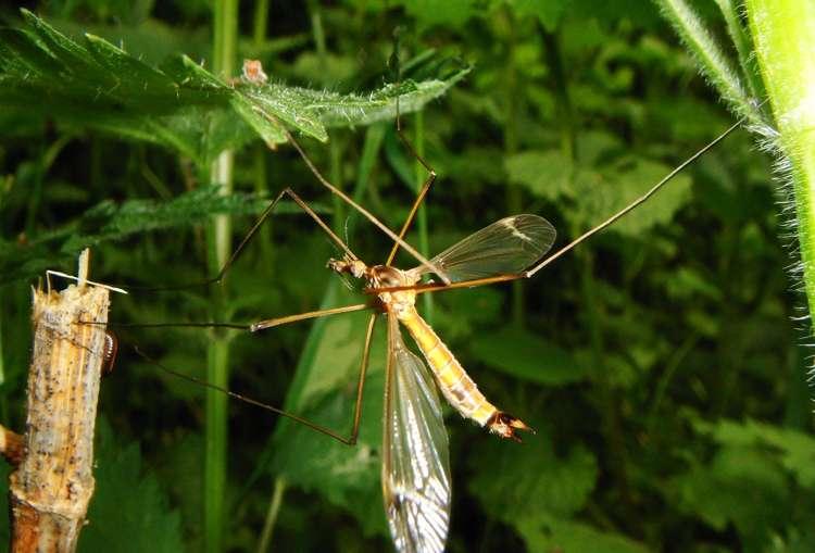sapere sulle zanzare